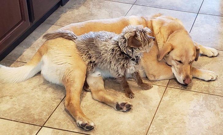 állatok között szoros barátság alakult ki14