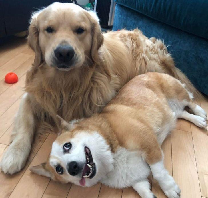 állatok között szoros barátság alakult ki3