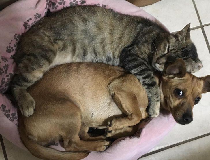állatok között szoros barátság alakult ki8