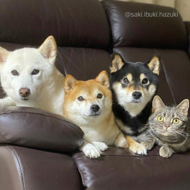 Cica épült be a 3 kutya közé