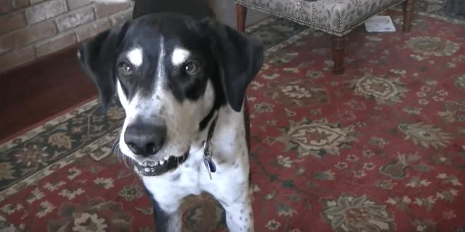 Gazdi szól kutyájának, hogy hamarosan kiscicák érkeznek a házhoz