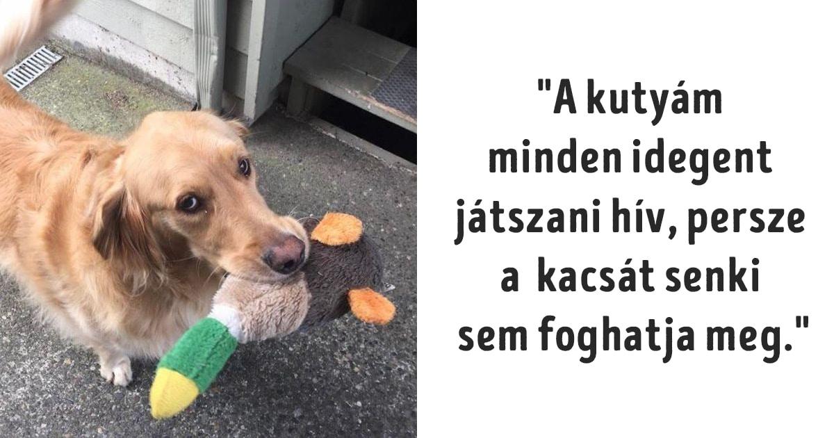 a kutyák valójában földre szállt angyalok