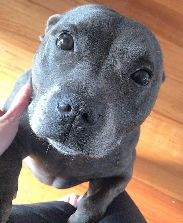 a kutyáknak csak szeretet kell5