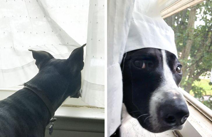 a szokásosnál is furább kutyák2
