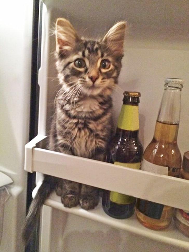 bajkeverő macskák3