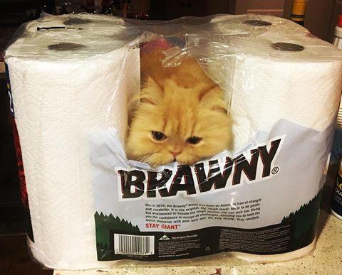 bajkeverő macskák5