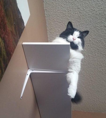 ez történik a macskás gazdikkal7