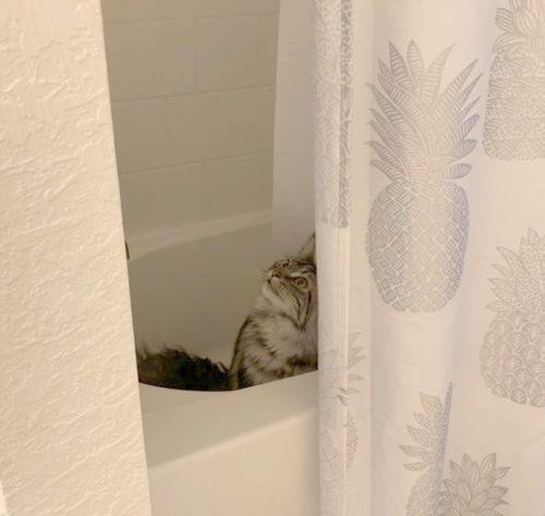 ez történik a macskás gazdikkal8