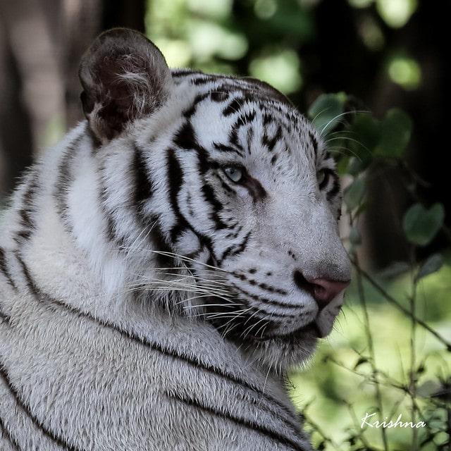 fekete-fehér állatok5