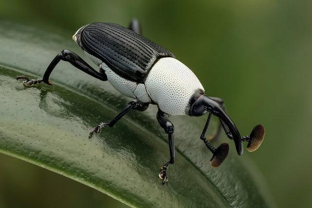 fekete-fehér állatok8
