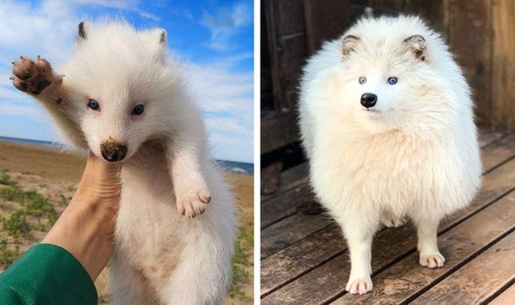 gazdi aki meglepődött, hogy mekkorára nőtt a kutyája14