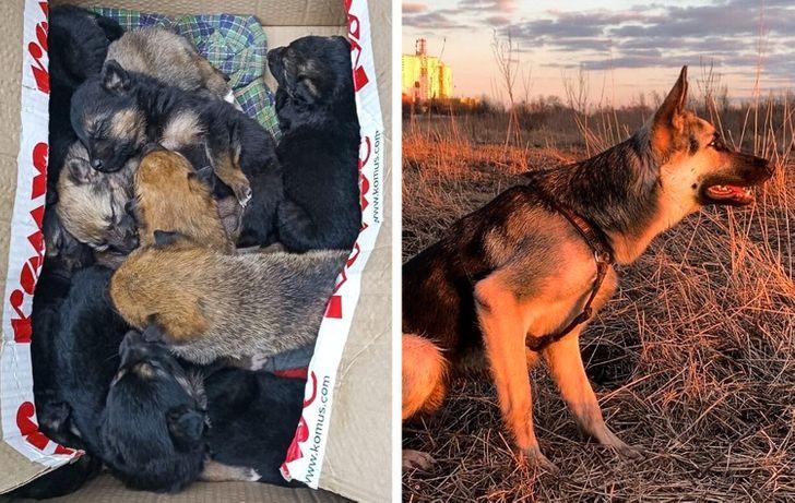 gazdi aki meglepődött, hogy mekkorára nőtt a kutyája4