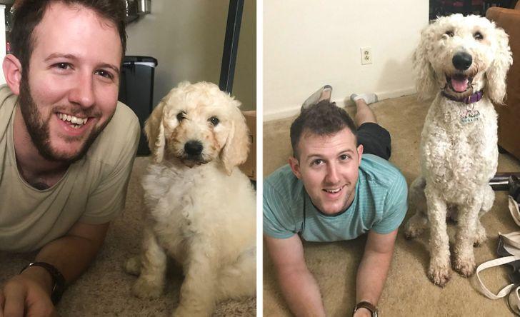 gazdi aki meglepődött, hogy mekkorára nőtt a kutyája8