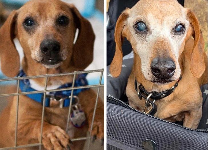 idős kutyák szeretik a gazdit14