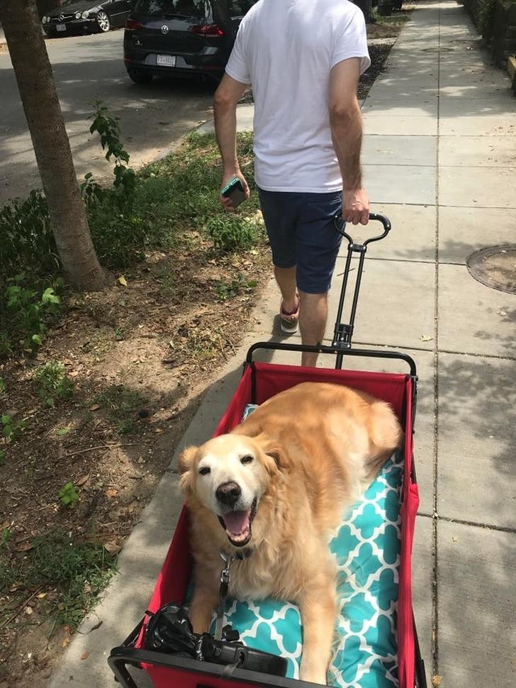 idős kutyák szeretik a gazdit6