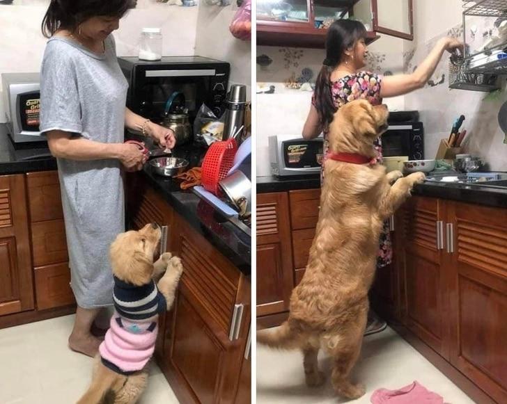 imádjuk a kutyákat10