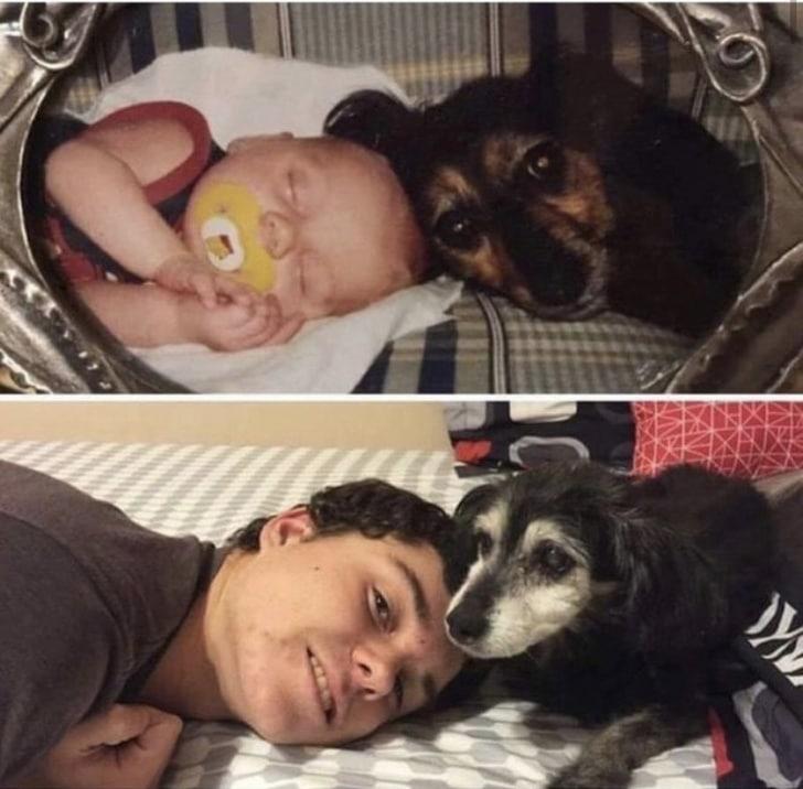 imádjuk a kutyákat11