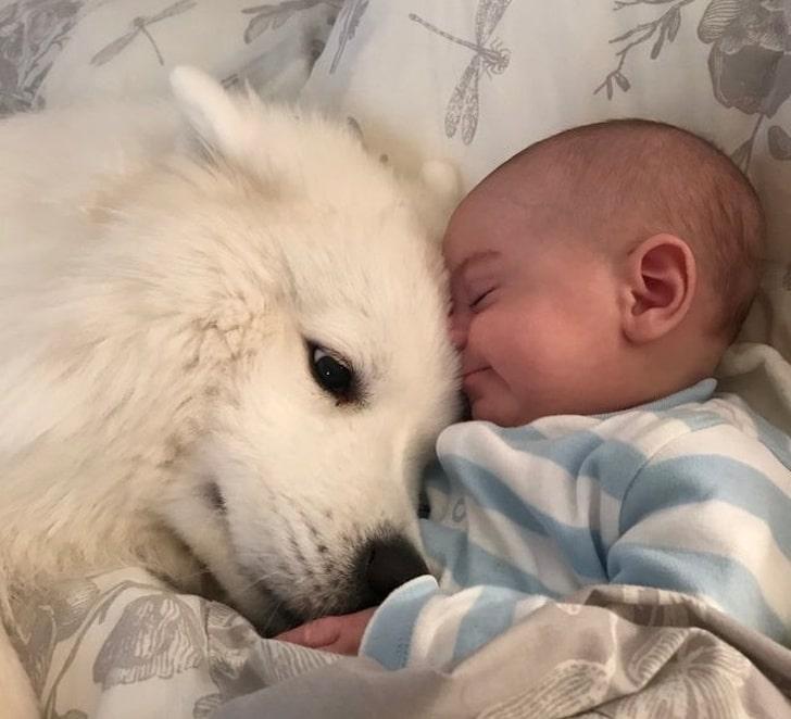 imádjuk a kutyákat5