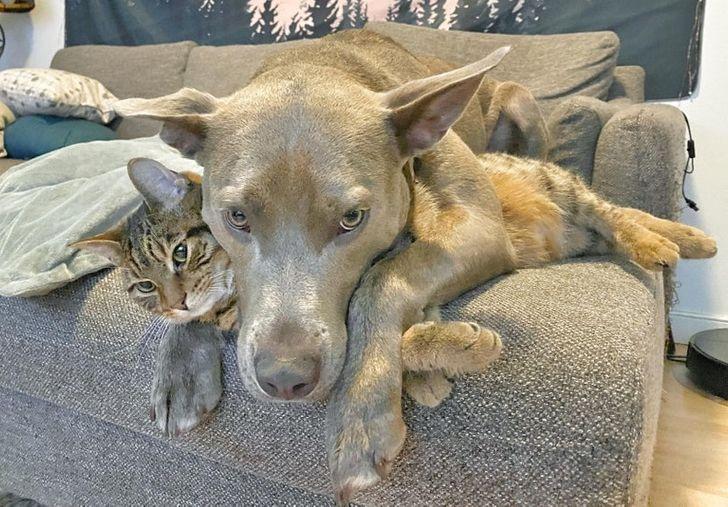kutyák és macskák tökéletes párost alkotnak1