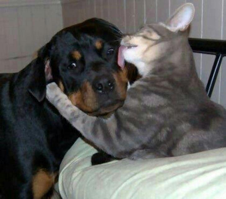 kutyák és macskák tökéletes párost alkotnak10