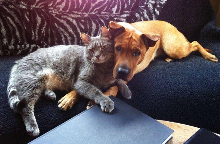 kutyák és macskák tökéletes párost alkotnak11