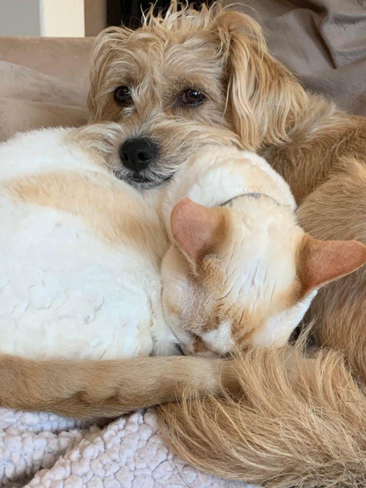 kutyák és macskák tökéletes párost alkotnak3