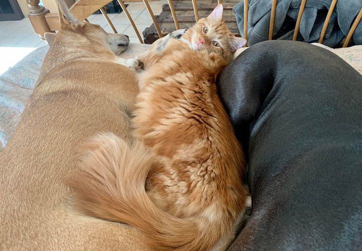 kutyák és macskák tökéletes párost alkotnak4