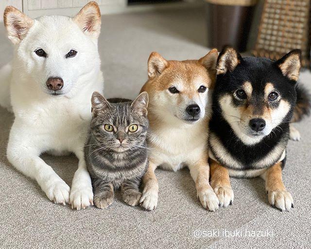 kutyák és macskák tökéletes párost alkotnak5