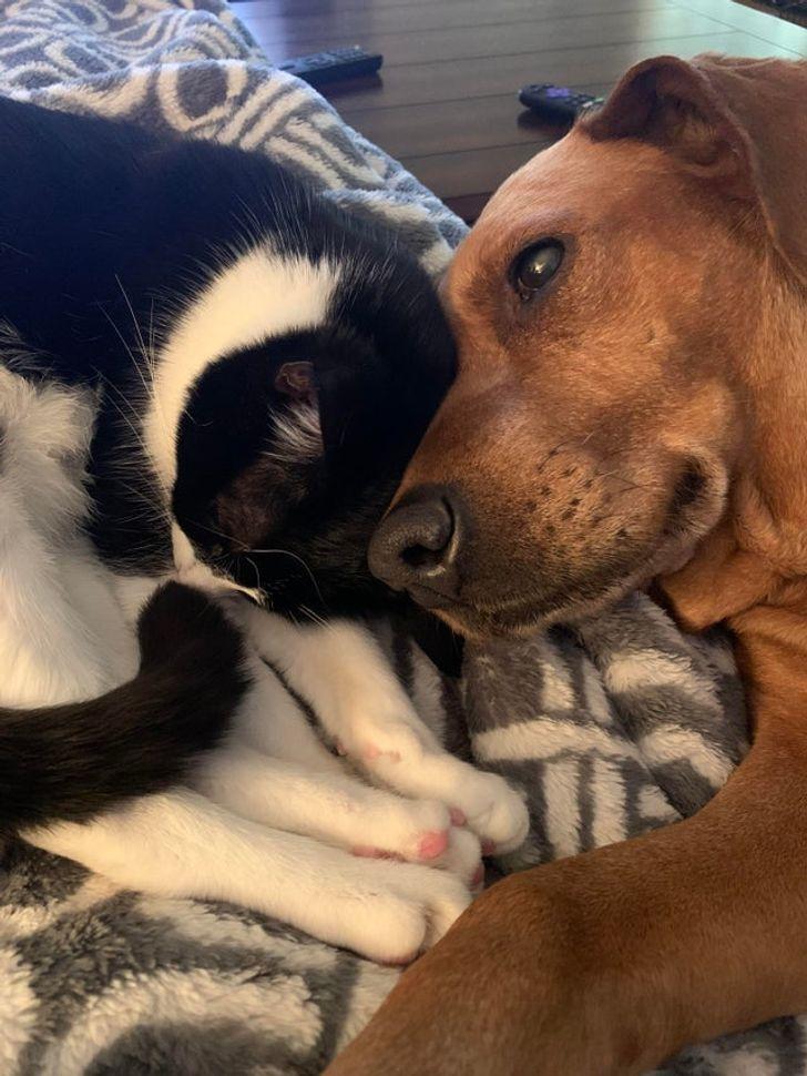 kutyák és macskák tökéletes párost alkotnak6