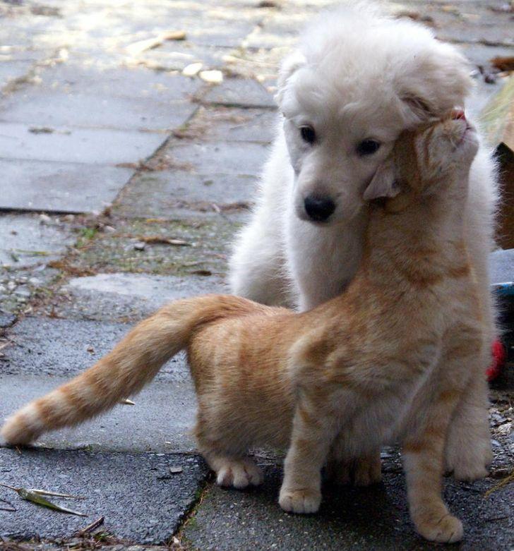 kutyák és macskák tökéletes párost alkotnak8
