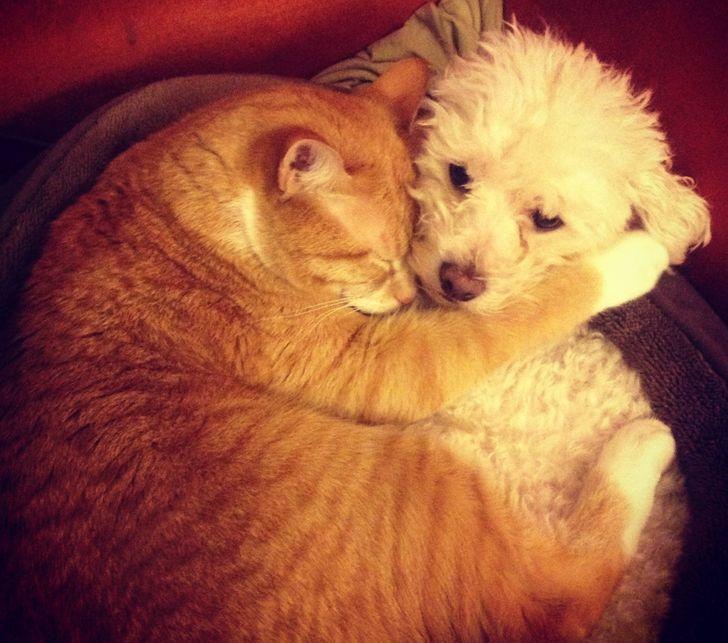 kutyák és macskák tökéletes párost alkotnak9