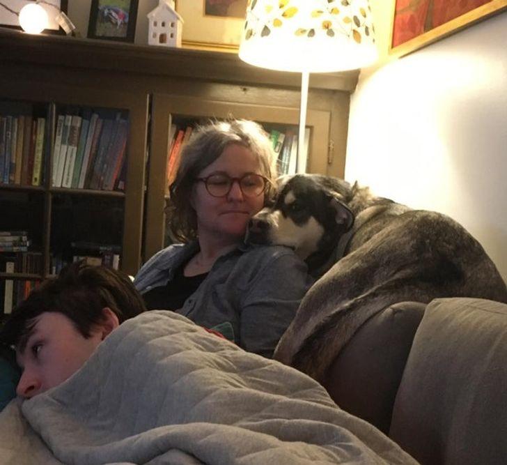 kutyák azt hiszik magukról hogy macskák