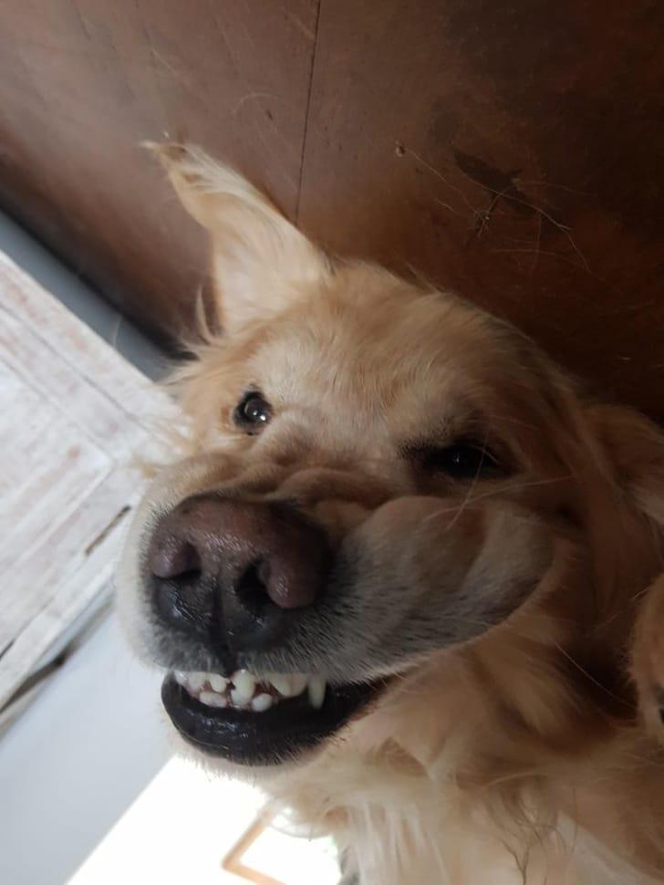 kutyák felvidítják a gazdit11