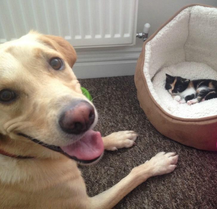 kutyák felvidítják a gazdit14