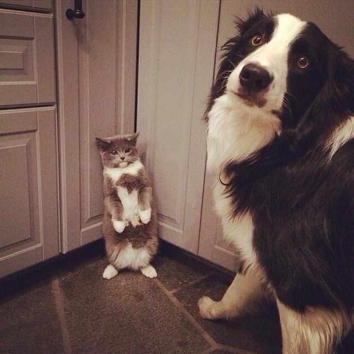 kutyák felvidítják a gazdit
