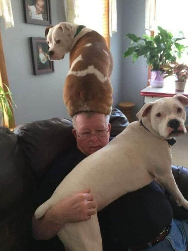 kutyák nem hagyják unatkozni a gazdit1