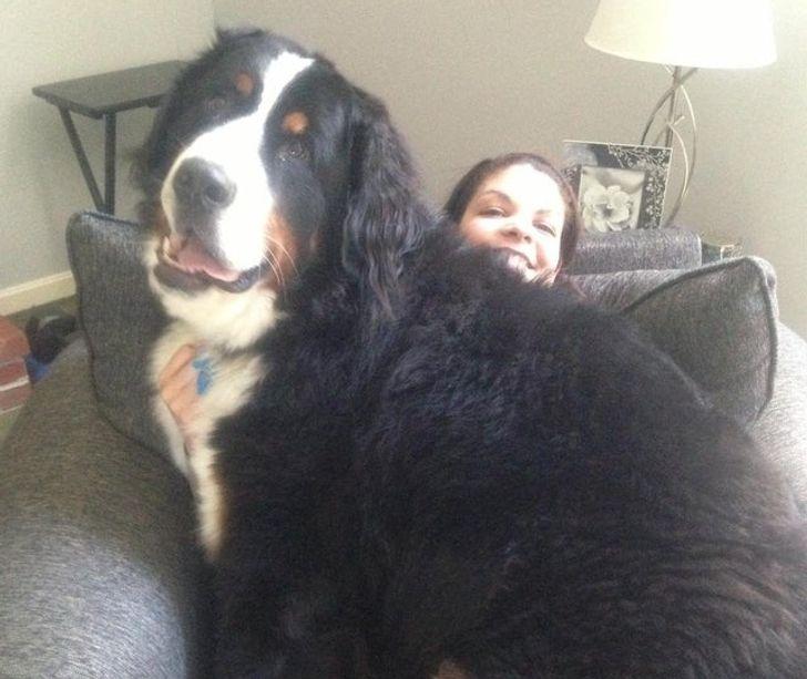 kutya a család kisbabája