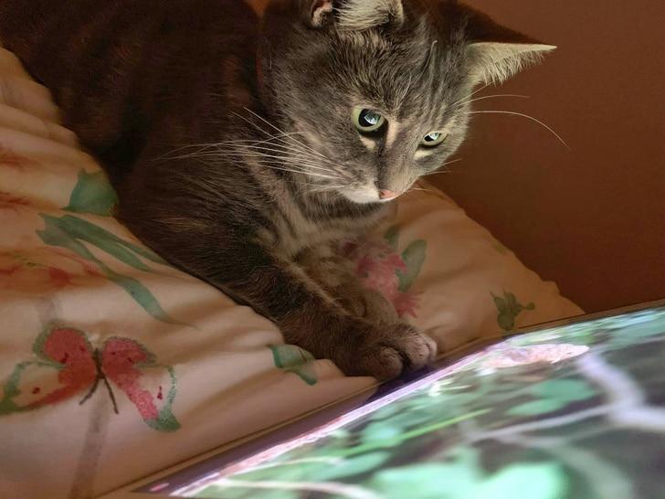 macska ujjai köré csavarta a gazdit