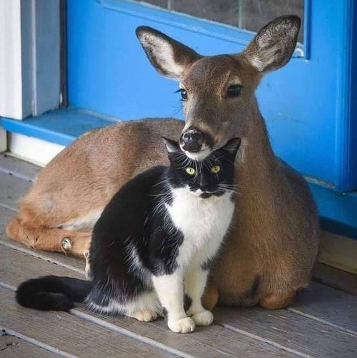 szívmelengető állat barátság13