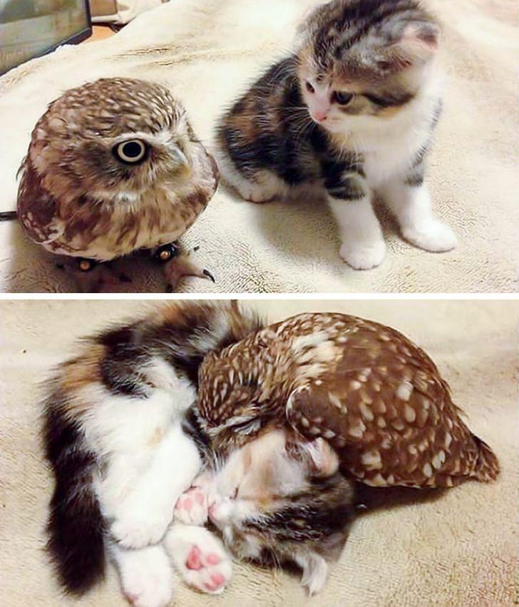 szívmelengető állat barátság14
