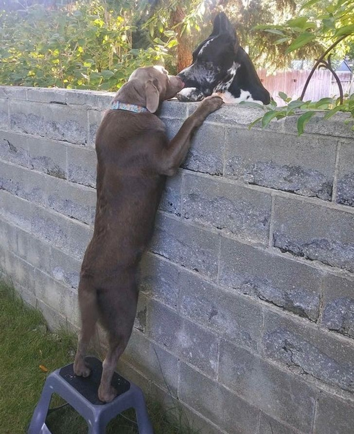 szívmelengető állat barátság15