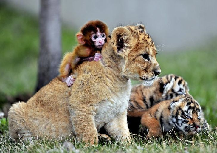 szívmelengető állat barátság16