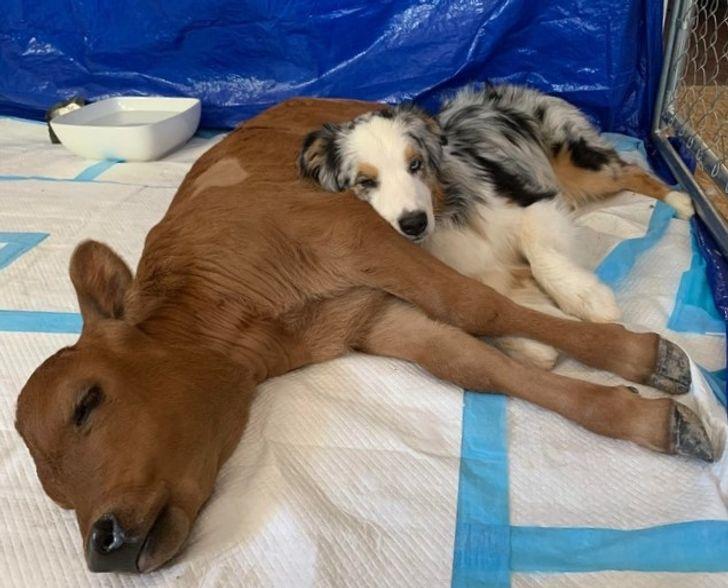 szívmelengető állat barátság17