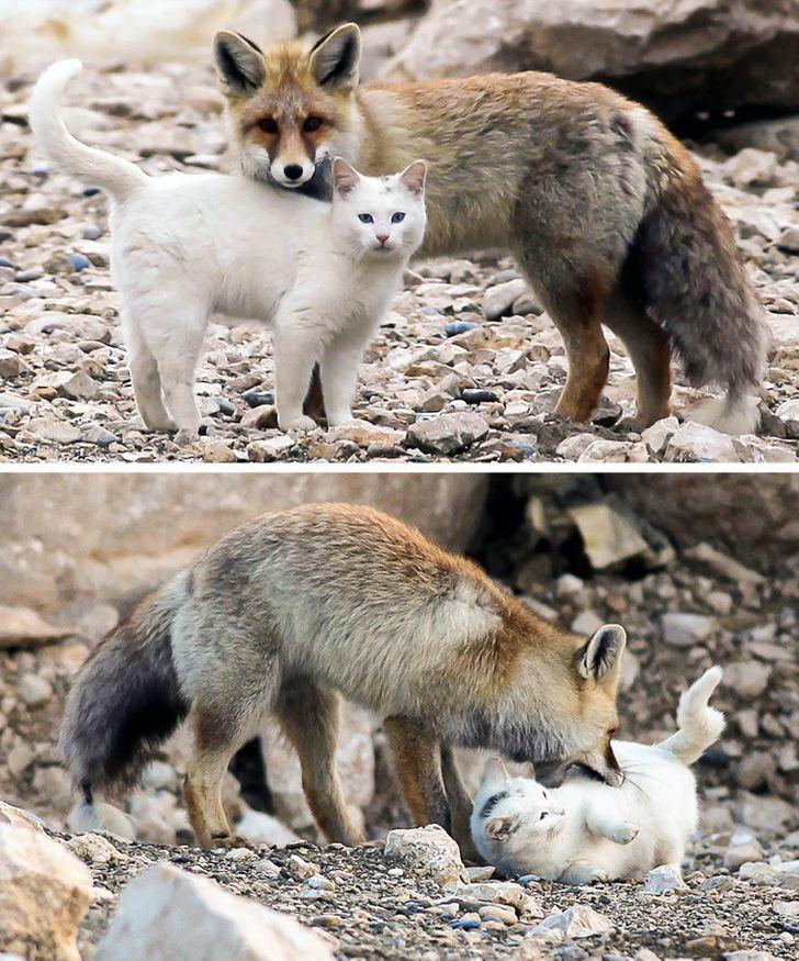 szívmelengető állat barátság19