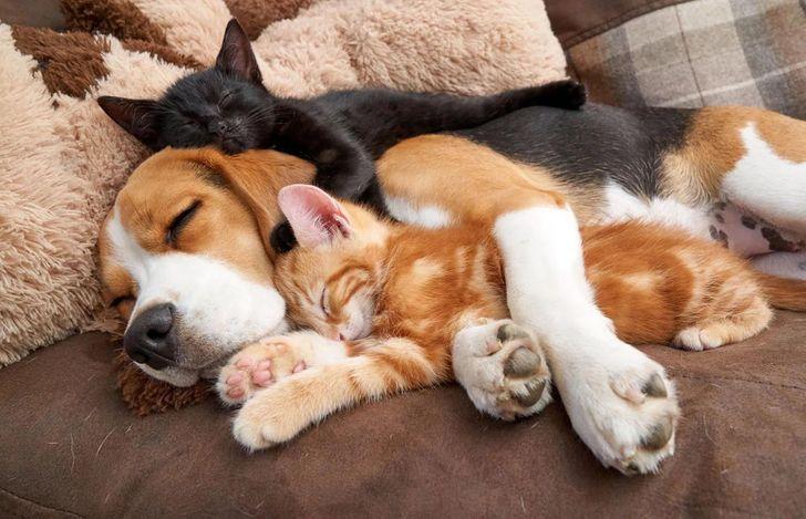 szívmelengető állat barátság2