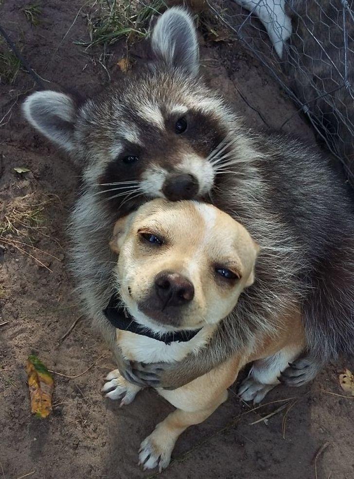 szívmelengető állat barátság3