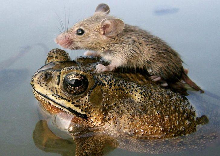szívmelengető állat barátság5