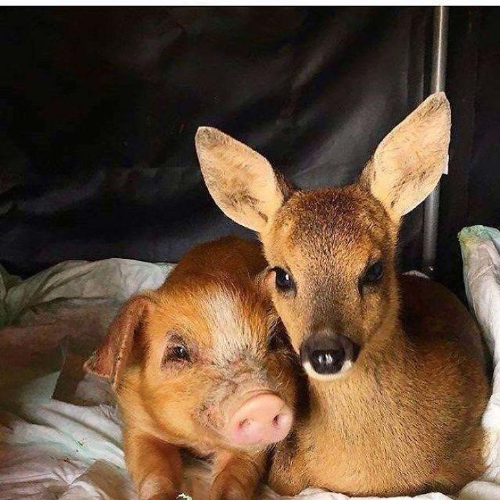 szívmelengető állat barátság6