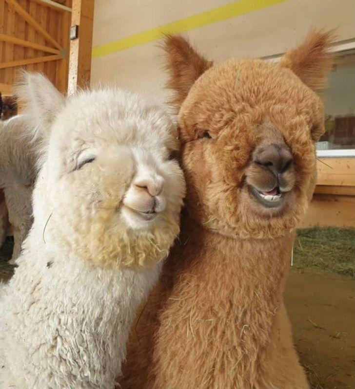 szívmelengető állat barátság7