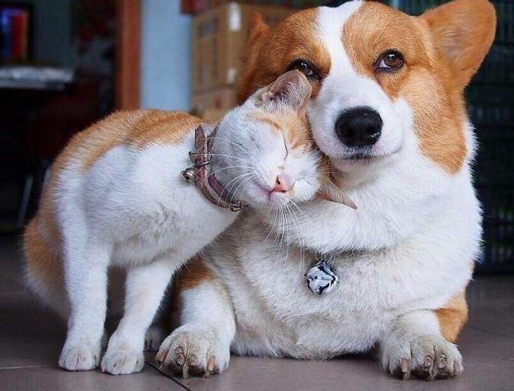 szívmelengető állat barátság9